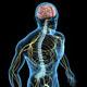 Нервная система, седативные, от стресса